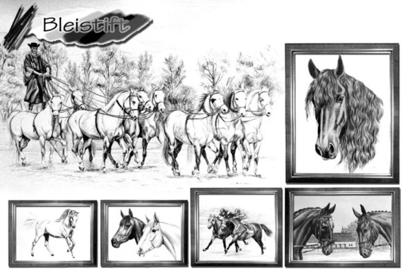 Bleistiftzeichnung Sonnenstein, Reitsport Portrait, Pferdeporträt Witzdam