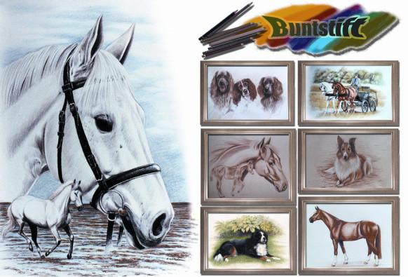 Pferdeportrait Farbe, Sabine Witzdam Kunst, Buntstiftzeichnung Weißenborn-Lüderode