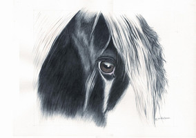 Aquarellbild Pferd, Tinkerauge Gemälde, Aquarellkunst Atelier