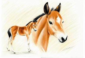 Ölgemälde Sonnenstein, Aquarellbild Pony, Ponyfohlen Witzdam