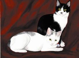 Ölgemälde Katze, Ölbild Sonnenstein, Katzenporträt Atelier, Tiergemälde Witzdam
