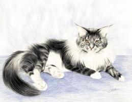 Buntstiftkunst Katze, Katzenbild Sabine Witzdam, Langhaarkatze Sonnenstein