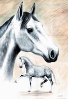 Schimmel Aquarell, Aquarellbild Sonnenstein, Pferdeporträt